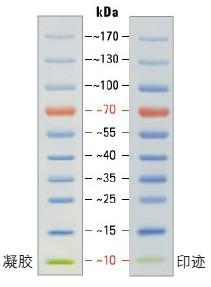 PageRuler预染蛋白Ladder预染蛋白marker(10-170kDa)