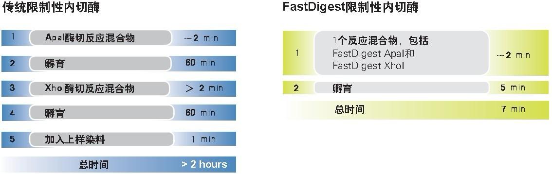 thermo FastDigest SalI快速内切酶货号FD0644