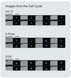 FlowSight 量化成像分析流式细胞仪-流式细胞仪